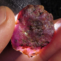 Lot of Natural Purple Red Bi-Colour Corundum Facet Rough Specimen  - 211.4 ct (6)
