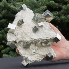 Cubic Pyrite crystals on matrix - 24 x 18 x 8 cm - 2337 g