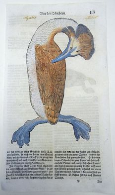 One leaf with 2 ornithological wood blocks - Conrad Gesner - Birds: Diver, Mergulus - 1669