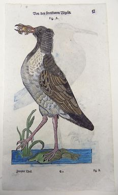 Conrad Gesner (1516-1565) - One leaf with 2 woodcuts on Ornithology - Crab Eater Plover, Wader - 1669