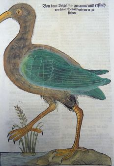 Conrad Gesner (1516-1565) - One leaf with large woodcut on Ornithology - Ibis, Long-legged wading bird - 1669