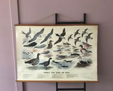 "Beautiful linen school poster ""Birds of dunes and coast"""
