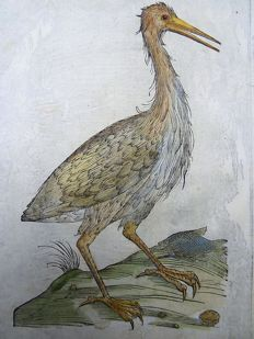 Ornithological woodclock on 1 leaf - Ulisse Aldrovandi (1522 – 1605) - Great Bittern - hand coloured - 1637