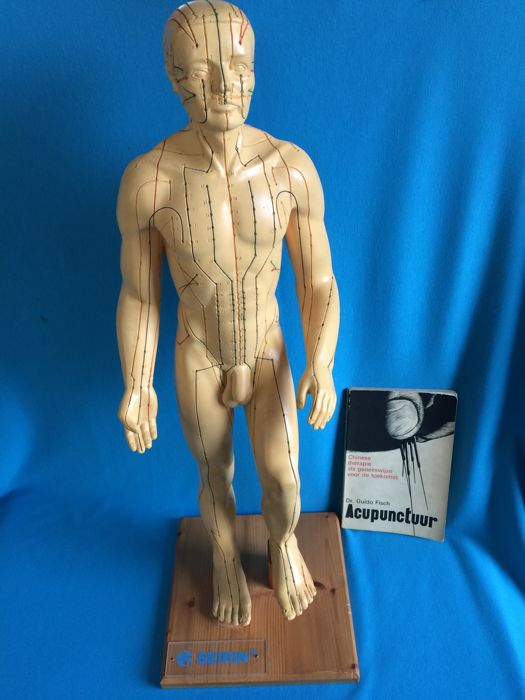 Large rubber acupuncture model man, height 76 cm, Seirin Brand. With acupuncture booklet.