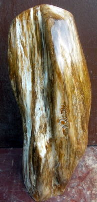 Trunk of petrified wood - 37.5 cm - 5.2 kg