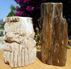 2 trunks of petrified wood - 220 and 270 mm - 10.7 kg (2)