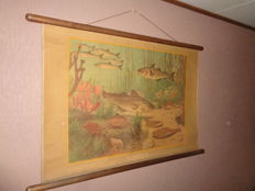 "Old nature school poster with fish by Koekoek ""In the North Sea"""