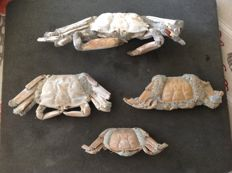 Lot with crab fossils of 4 Macrophtalmus crabs