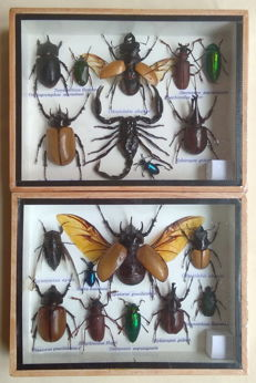 Interesting pair of Insect Collections - various species - 20 x 15cm  (2)