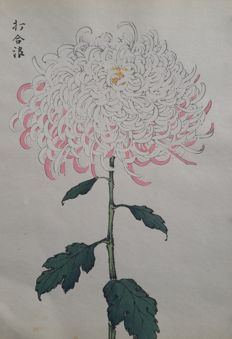 Beautifully printed chrysanthemum by Keika Hasegawa (fl. ca. 1900) and chrysantemums by unknown artist - Japan - 1885 and ca. 1900