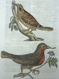One leaf with 2 ornithological wood blocks - Conrad Gesner - Birds: Eurasian Wrynecks - 1669
