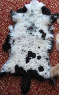 Fine, black and white natural Jacob Sheep skin - Ovis aries - 110 x 75cm