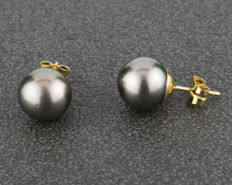 Earrings in 18 kt yellow gold - - Tahitian Pearl - Diameter 10.65 mm