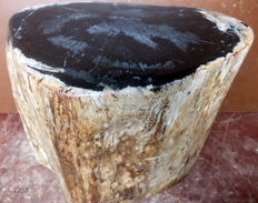 Trunk of petrified wood - 30 x 20 x 27 cm - 22.4 kg