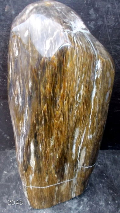 Trunk of petrified wood - 360 x 120 mm - 9.6 kg