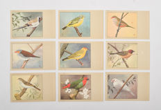 Netherlands-1960 144 x bird postcards from P.Sluis Vogelvoeders