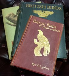 Ornithology; 3 books on British Birds - 1911/1953