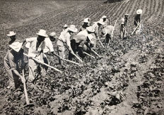 Raul Corrales (1925-2006) - 'Cultivating in Cuba', 1960's