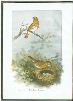 R. Bowdler Sharp - Sketch-book of British Birds - 1898