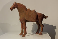 An Exceptional Red Painted Pottery Tang Dynasty Horse with Separate Saddle, with TL test - High 28 cm