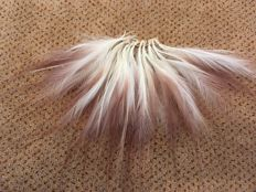 Greater Bird of Paradise feathers - Ceremonial artefact - Paradisea apeda - 26cm  (12 x 10)