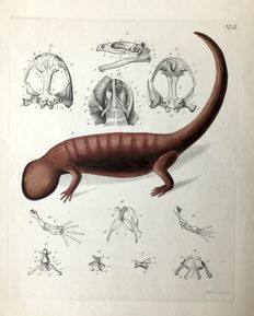 F. Guimpel (1774 - 1839) - a collection of sealife and lizards ethings