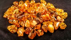Huge Lot of polished Honey colour Baltic Amber pieces - 455 gm (75)