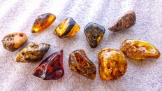 Lot of polished Baltic Amber pieces - 97 gm ( 10 )