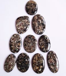 Turritella agate  Gemstone lot 581 ct - 10 pcs