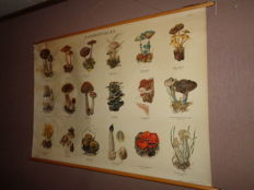 "Old school poster / school map on linen ""Paddestoelen""   Images of 18 mushrooms growing in the Netherlands"