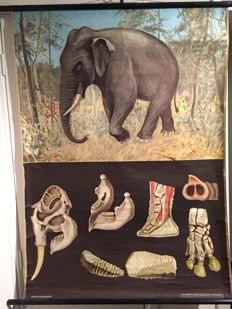 Old Zoological school Biology Jung Koch Quentell poster Elephant