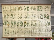 "Very nice old original school poster / school map on linen with the outline of the ""agricultural crops"" with various grasses, clovers, grains and various other crops"