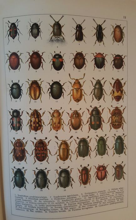 Lot with 3 books about (water)beetles - 1930/1992