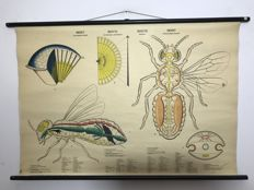 School poster insect / insecte / insecto / insekt