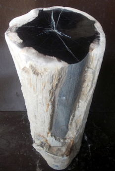 Mini side table from trunk of petrified wood - 49 x 19 x 18 cm - 18.8 kg