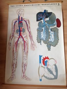 "Old anatomical school poster ""Blood vessels"""
