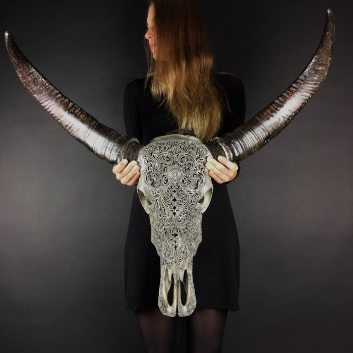 Skull Art - authentic engraved skull of a water buffalo in matte grey (80 x 84cm)