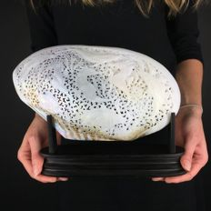 Large engraved mother of pearl shell - Indonesia