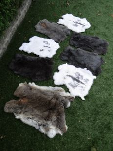Large brown/grey Common Rabbit skins - Oryctolagus cuniculus - 40 x 55cm  (8)