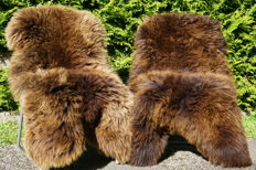 Fine natural brown/golden-brown sheep skins - Ovis aries - 125 x 75 cm (2)