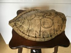 Exact replica of turtle shield engraved with the travels of James Cook