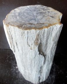 Mineralised trunk of petrified wood - 38.5 x 18 x 19 cm - 18.2 kg