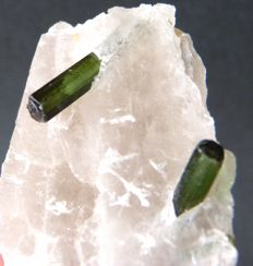 Green tourmaline crystallised on quartz - 5.6 x 2.2 cm - 54 g