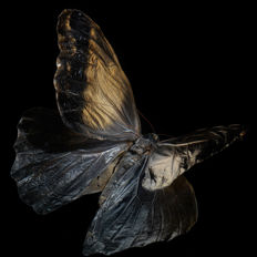 Alexander James (1967-) - 'Swarm 4257' underwater butterfly