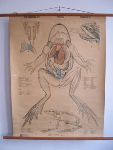 School poster / School card of the FROG, very rare poster on linen that can be rolled up, author G. Erdtman.