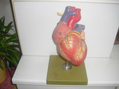 Anatomical heart model, manufacturer's name SOMSO made in Germany