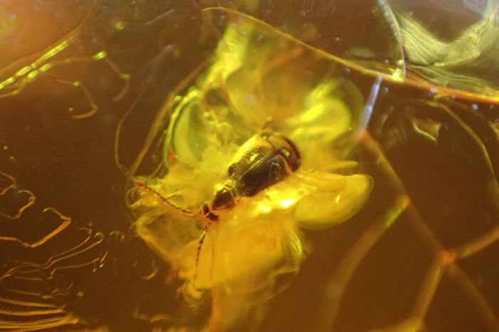 Baltic amber pieces with insect inclusions - 17-23 mm (6)