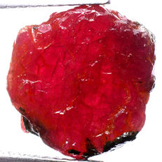 Top quality unheated natural ruby rough specimen - ca. 11 x 2 x 3 mm - 6,00 ct (2)