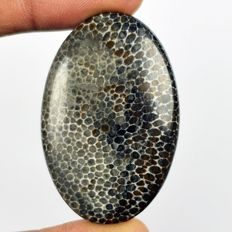 Nice Natural Dinosaur Bone Cabochon - 46 x 30 x 6.35 mm - 60 cts