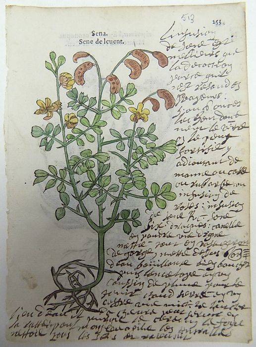 2 x botanical woodcuts by Leonhard Fuchs - Senna, Swine cress - With extensive manuscript descriptions - 1549